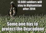 poppy-afghanistan-300x217