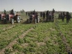 r-US-TROOPS-FIGHT-AFGHAN-OPIUM-FARMING-large570